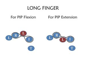 Index Finger Orthosis for PIP Flexion and Extension